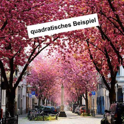 kirschbluete-bonn-heerstrasse