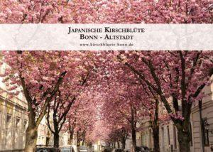 kirschbluetenkalender-2019