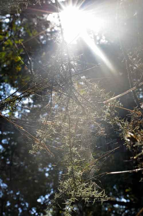 Bretagne-Wald
